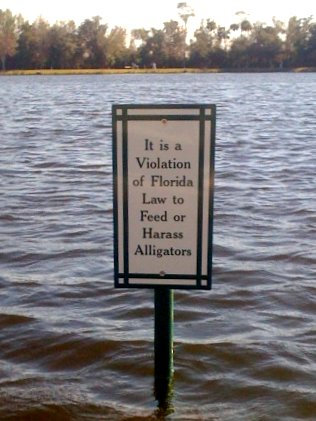 Don't feed the Alligators